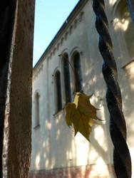 Fallen Leaf by pidalka