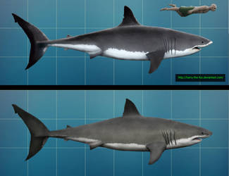 Great White Shark- before and after by Harry-the-Fox