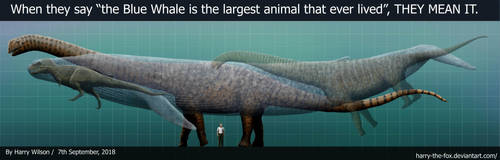 The Blue Whale really IS the biggest animal by Harry-the-Fox