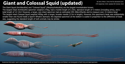 Giant Squid and Colossal Squid Size by Harry-the-Fox