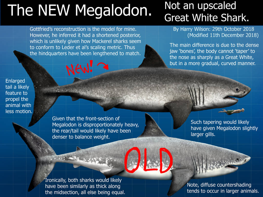 My NEW Megalodon by Harry-the-Fox
