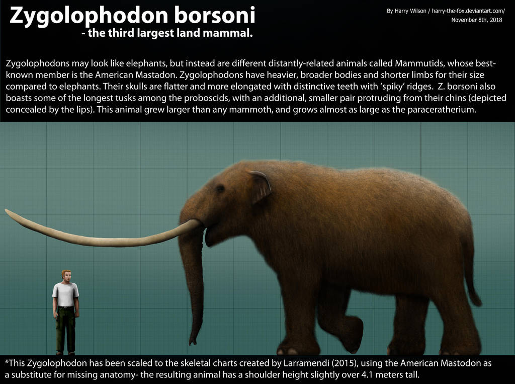 Zygolophodon borsoni Size by Harry-the-Fox