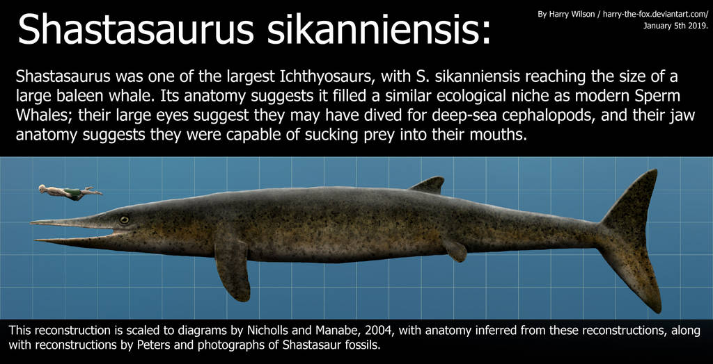 Shastasaurus sikanniensis size by Harry-the-Fox