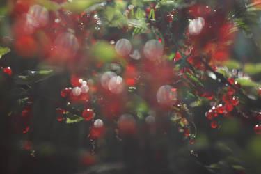 Berry dreams by Evarsel