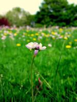 Purple flower by ireene91