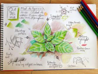 Field sketch by fabianfucci