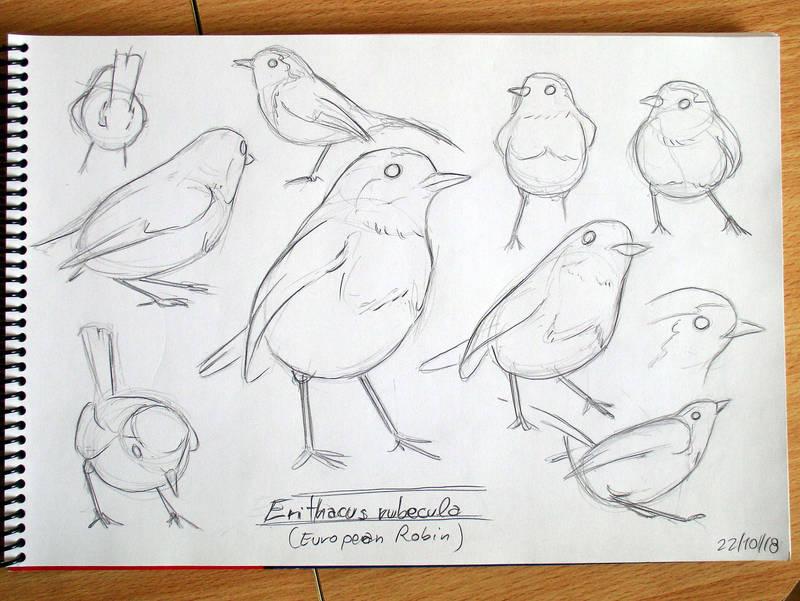 European Robin by fabianfucci