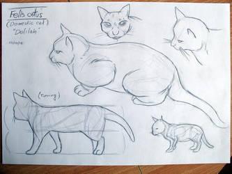 Domestic cat by fabianfucci