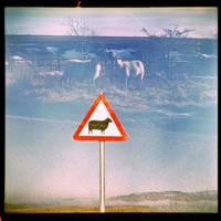 free range sheep II by thesadstork
