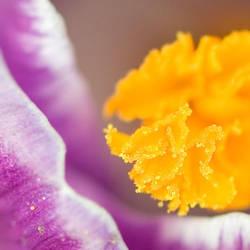 Flower Macro 1 by vlad042