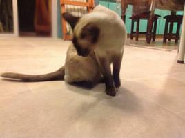 cat cute 1 by solchu123