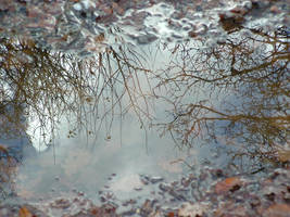 Silver reflection 2 by jainas