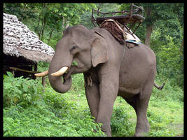 Elephant by jainas
