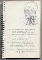 Sternocleidomastoideus by hank1