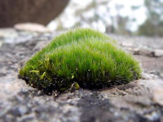Moss by TheRandomManCan