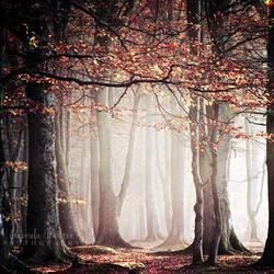 Morning fog by leelloor