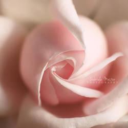 Pure pink by leelloor