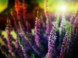 summer breath by leelloor
