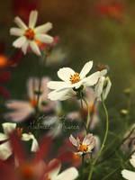 Sweet nature by leelloor