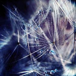 blue lies by leelloor