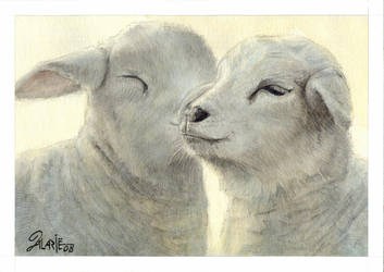 Lambs by alarie-tano