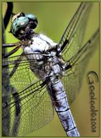 Dragonfly Macro by Gooiool