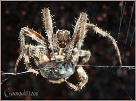 Spider in the dark by Gooiool