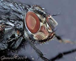 Fly . macro2 by Gooiool