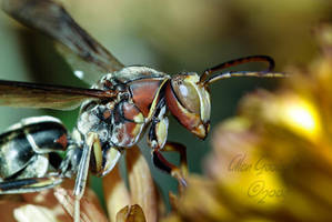 Wasp 2 by Gooiool