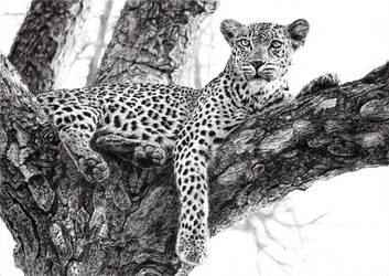 Leopard by tung841