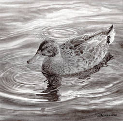 Duck by tung841