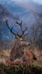 Red Stag by gsphoto
