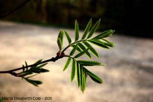 Green growing by MissCole