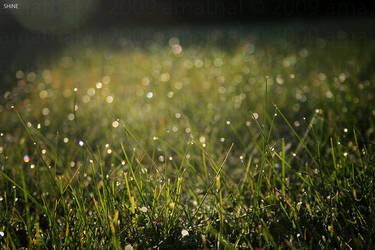 Shine by amathal