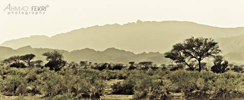 Nature in BW 1 by AhmadFekri