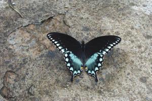 Butterfly by dreamweaver69stock