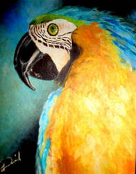 Brazilian Macaw by Pentaro22
