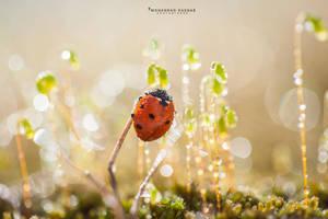 LadyBird by MohannadKassab