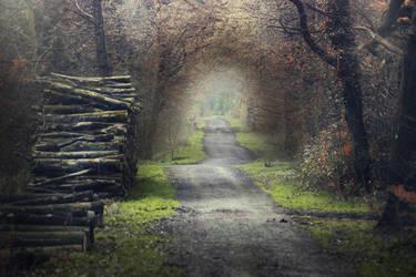 Path by MohannadKassab