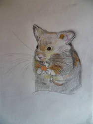 Hamster by Sandro98ch