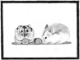 Hamsters by Sandro98ch