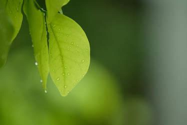 leaves by hersley