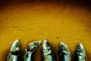 Something Fishy by hersley
