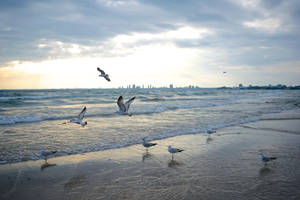 Seagulls at the beach by knilch