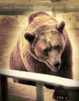 Bear by Reemi-Lover