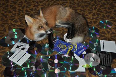 CD-Fox by Najlvin