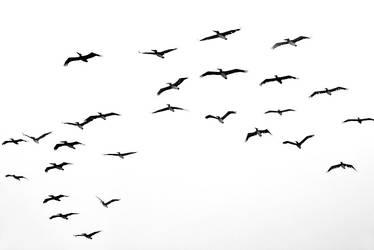 black on white by VaggelisFragiadakis