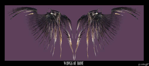 Wing of Bones by kitwickliff