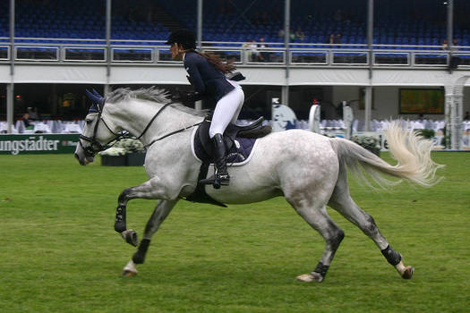 Show Jumping Stock 017 by LuDa-Stock