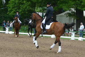 Dressage Flying Change Stock 02 by LuDa-Stock